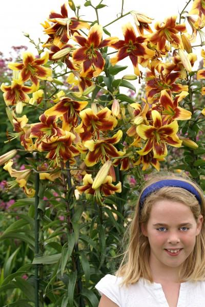 lily bulb Robert Swanson